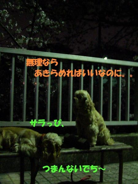 b0067012_1932162.jpg