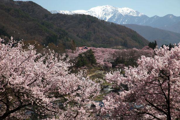 2010年4月18日 高遠 桜ツーリングのお知らせ<2010-NO3>  _d0038712_1546568.jpg