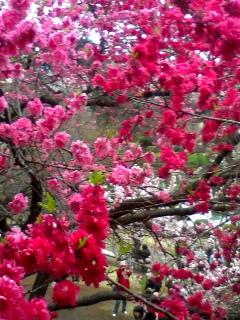 桜の入学式_b0083620_1542041.jpg