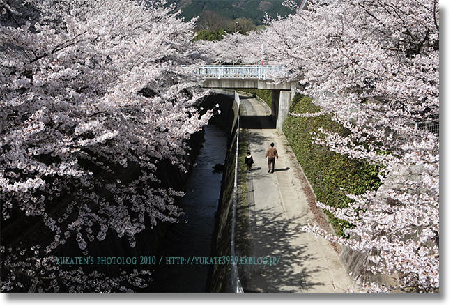 桜2010 後編_c0136524_2095546.jpg