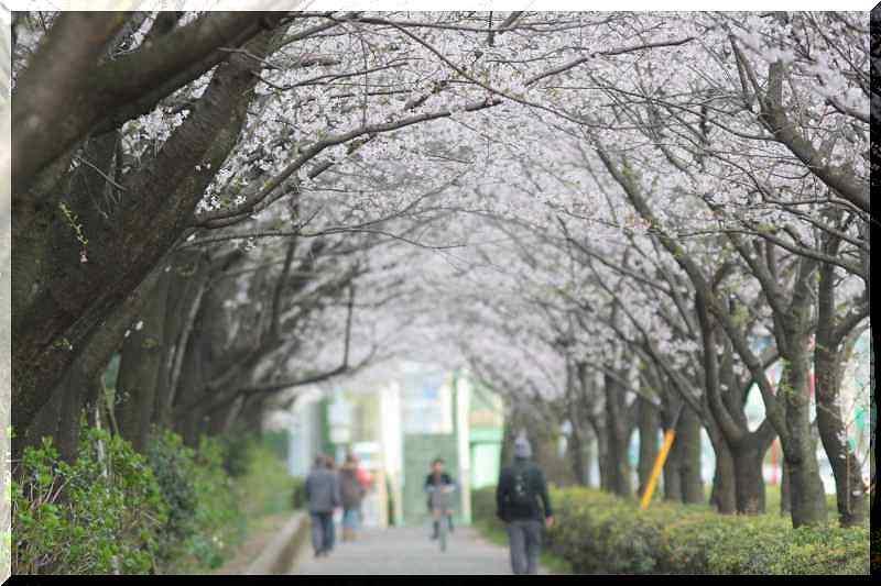桜と鳥さん_f0100825_02878.jpg