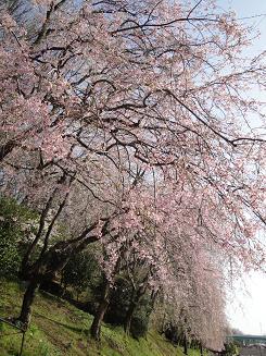 お花見_e0170128_1963181.jpg