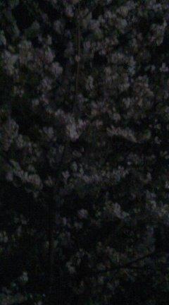 f0041031_18483326.jpg