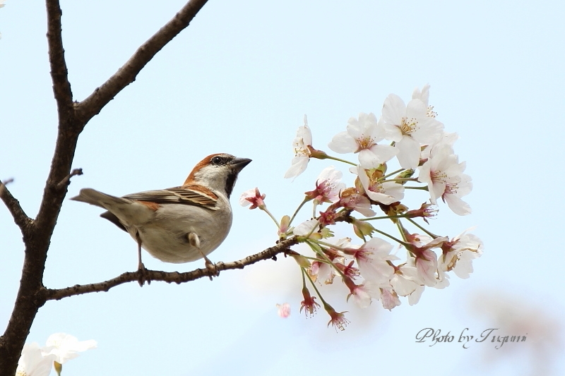 桜花を食む_f0037633_849521.jpg