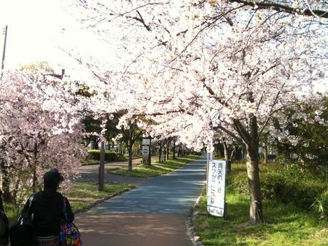 桜が満開_d0085634_17284023.jpg