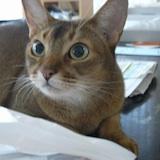 猫は友人か?_b0102247_2229842.jpg