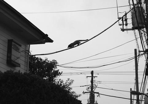 Wild life in Tokyo_a0086851_211571.jpg
