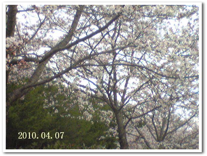 f0184055_10552566.jpg