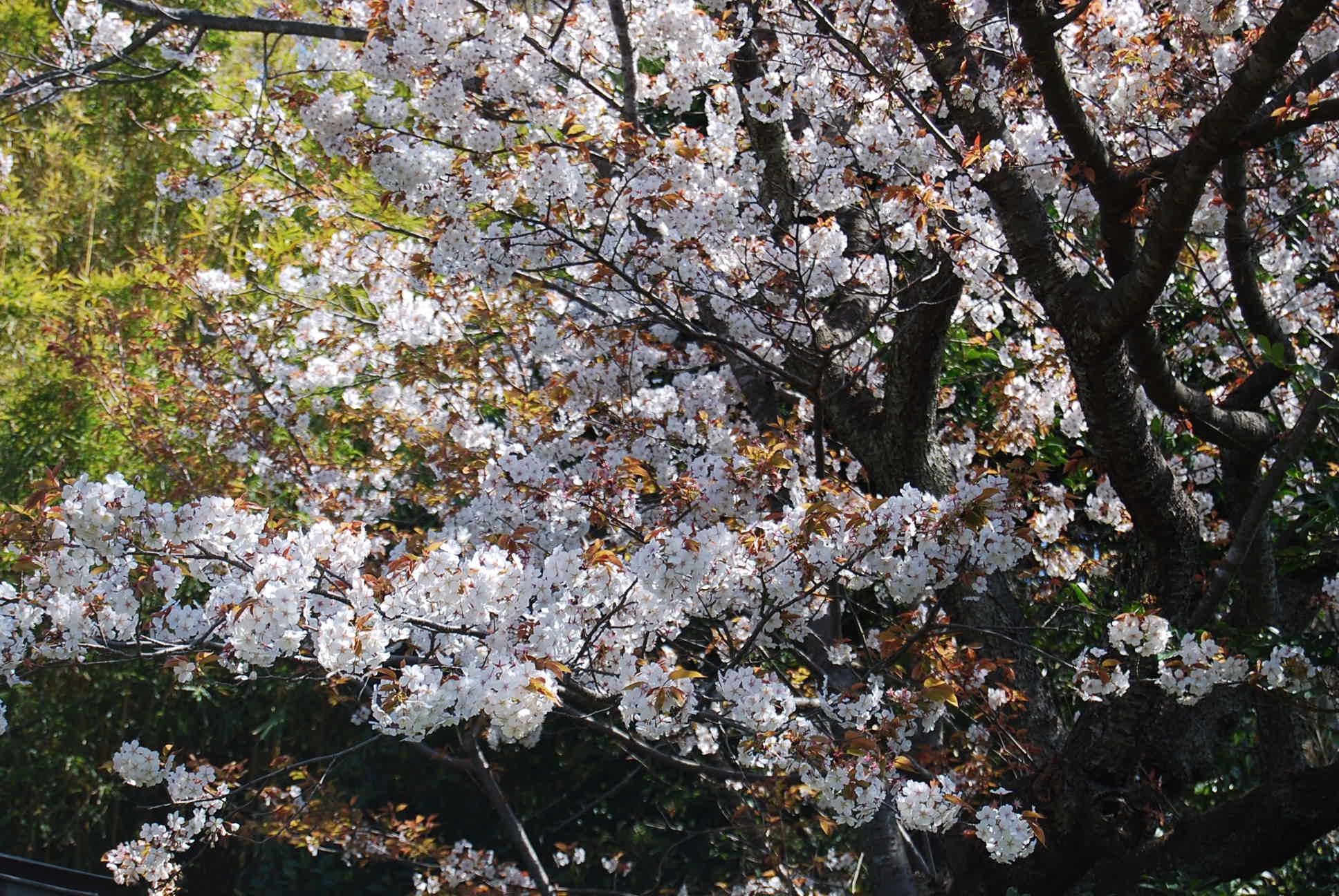 春爛漫_e0142956_1051219.jpg