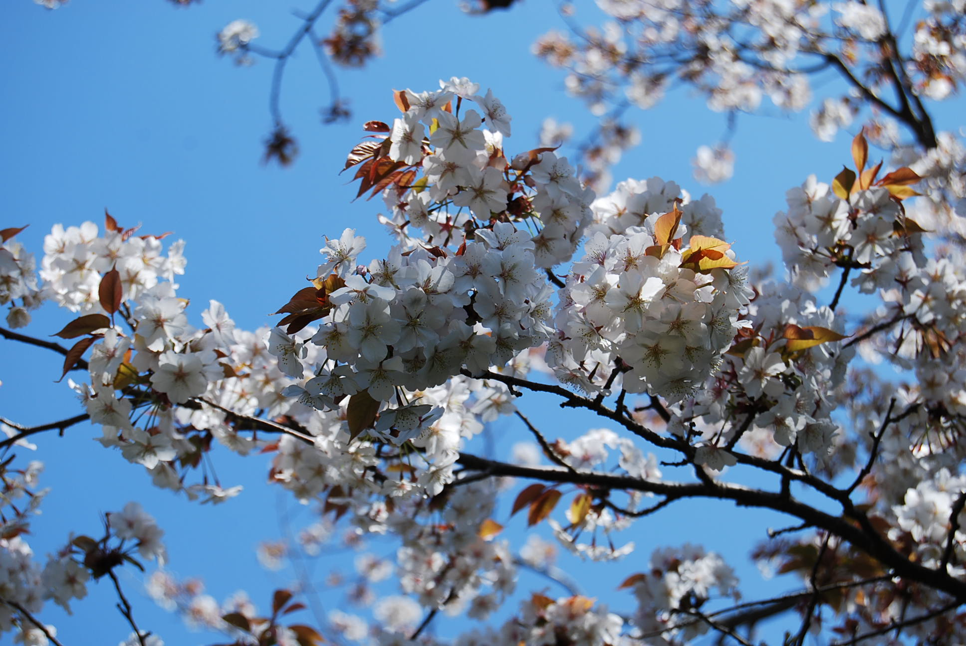 春爛漫_e0142956_10524132.jpg