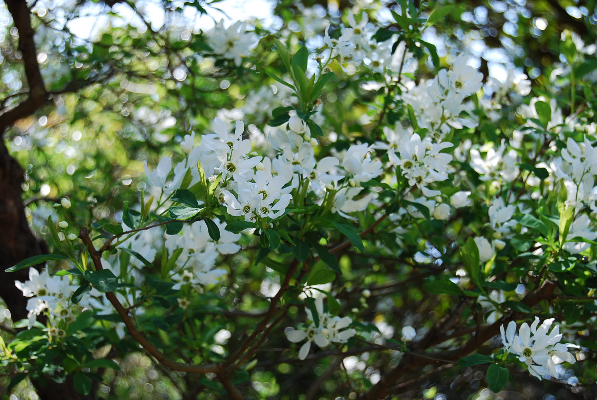 春爛漫_e0142956_1053533.jpg