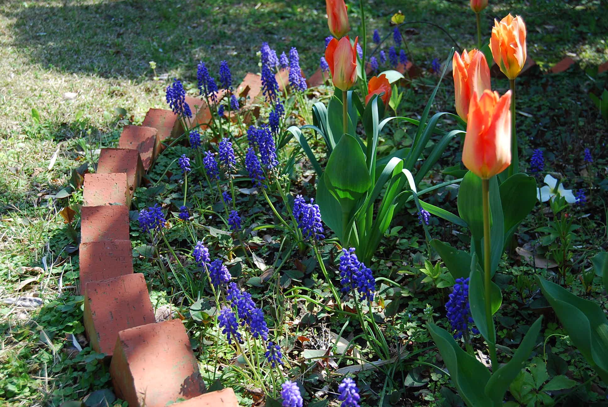 春爛漫_e0142956_10563523.jpg