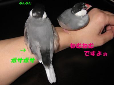 b0158061_2057144.jpg