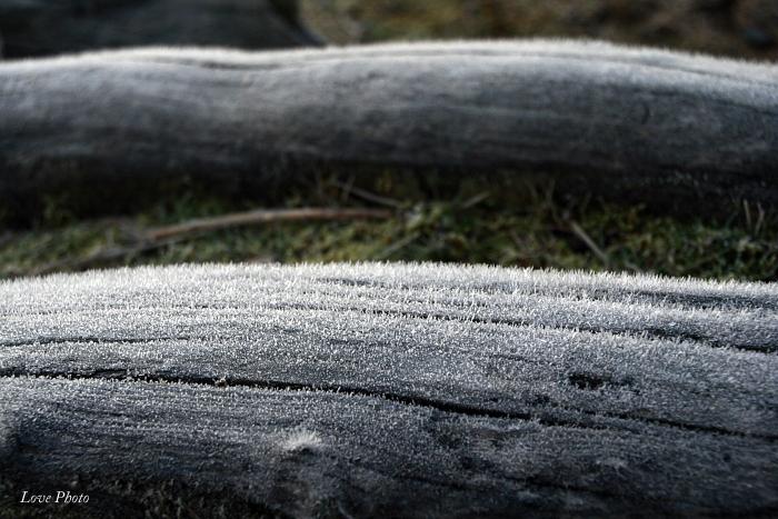 霜の降りた若草山_a0116472_17133139.jpg