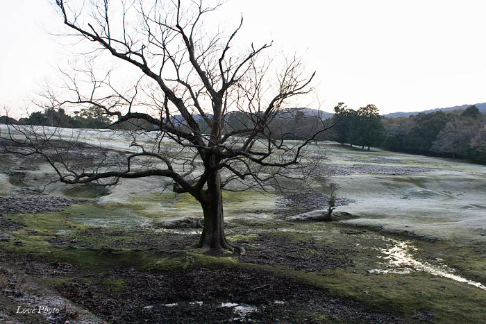 霜の降りた若草山_a0116472_1742495.jpg
