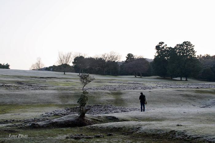 霜の降りた若草山_a0116472_1773944.jpg