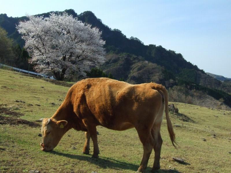 春の輝き_b0188175_203442.jpg