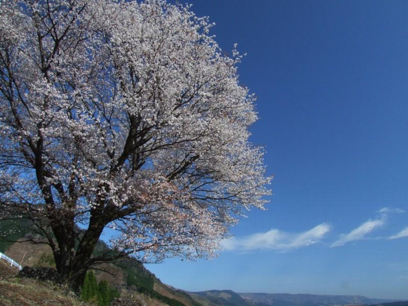 春の輝き_b0188175_2042467.jpg