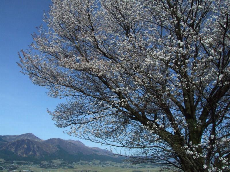 春の輝き_b0188175_204542.jpg