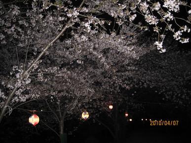 玉川の里で夜桜見物_e0016894_747435.jpg
