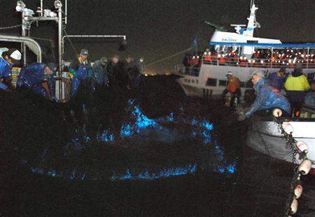 富山ホタルイカ漁が最盛期 波間にきらめく青い光_b0064113_123356.jpg