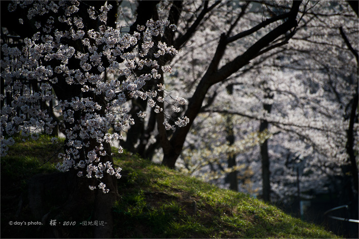 団地桜景 #04_e0117517_17452620.jpg