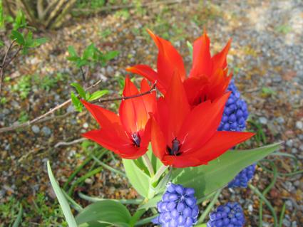 我が家のお花見~!_f0129726_22282878.jpg