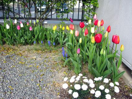 我が家のお花見~!_f0129726_225328.jpg