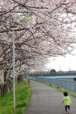 春のお散歩_e0195830_17283619.jpg
