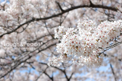 春の公園_e0195830_1736112.jpg