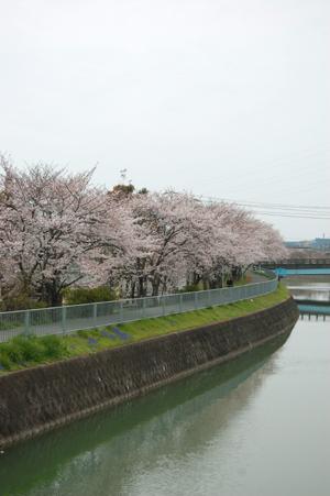 春のお散歩_e0195830_2163319.jpg