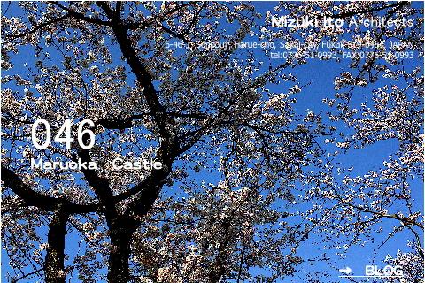 いやぁ〜春ですね!_f0165030_5324232.jpg