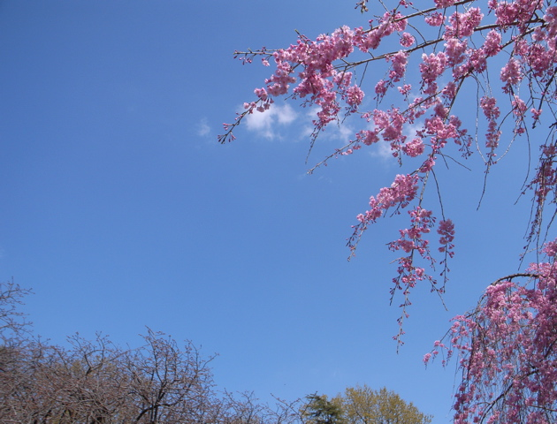 spring_e0070236_034762.jpg