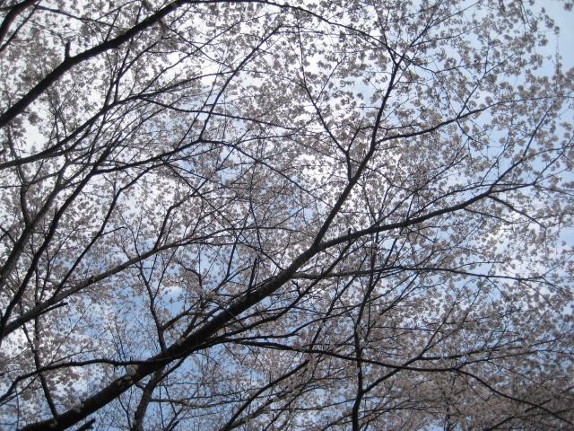 春です!!_c0214750_1128103.jpg