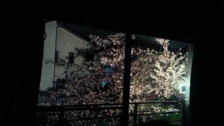 桜の季節はあっという間に!_b0105458_10281861.jpg