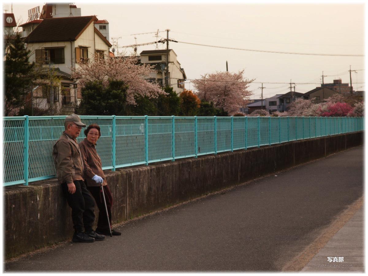 ご近所桜 3_f0021869_0334224.jpg