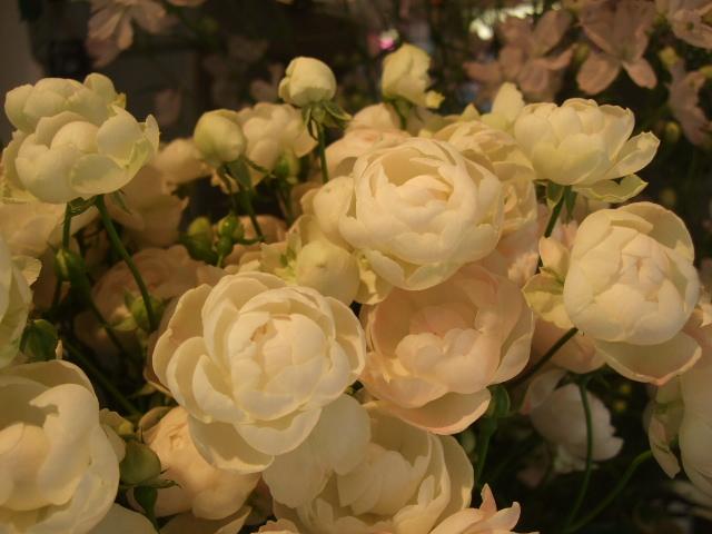 オークリーフ(愛しい花)_f0049672_14175714.jpg