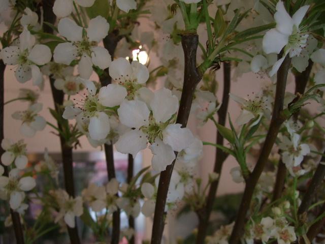 オークリーフ(愛しい花)_f0049672_14181458.jpg