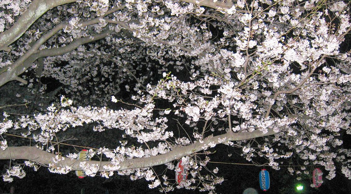昼・紅葉(モミジ) 夜・桜_a0107574_22384066.jpg