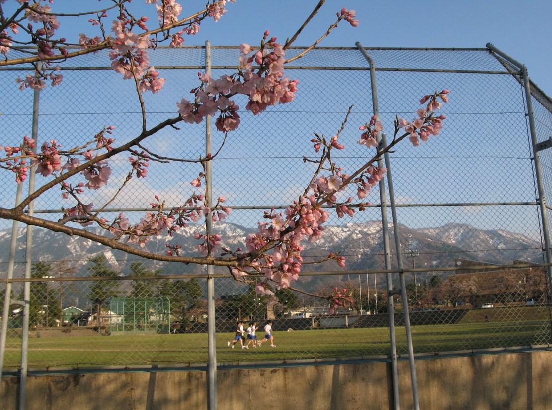 桜のある風景 Ⅱ_d0047885_23513718.jpg