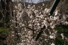 恋の季節です~4月の畑_f0106597_16354178.jpg