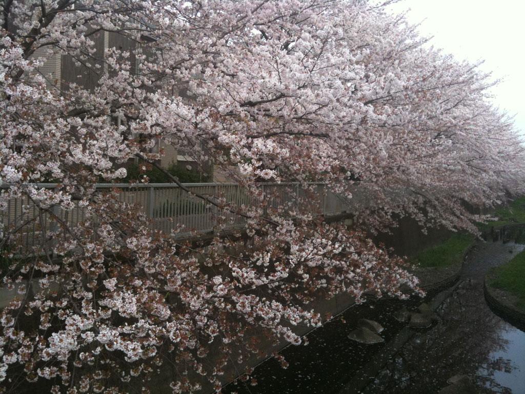 2010 春_b0060102_1525691.jpg