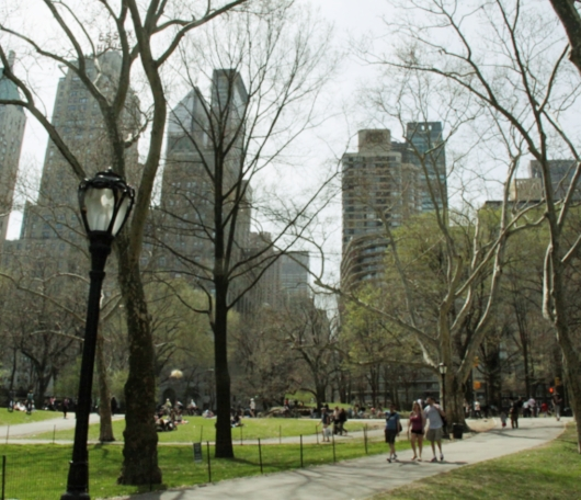 ニューヨークはすっかり春です_b0007805_2315636.jpg