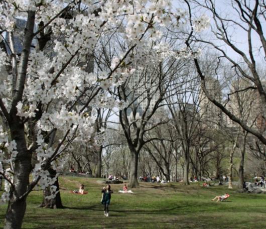 ニューヨークはすっかり春です_b0007805_23214561.jpg