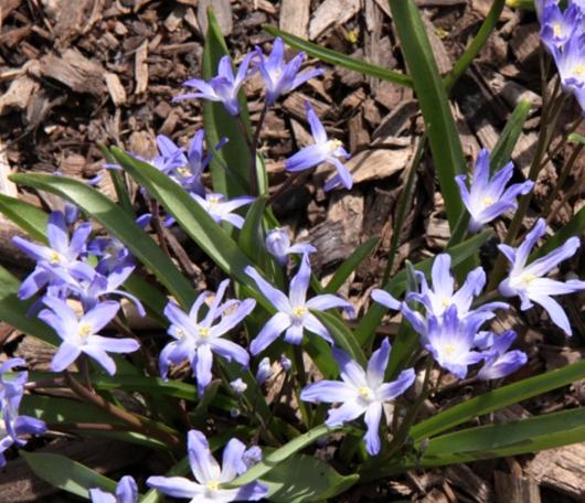 ニューヨークはすっかり春です_b0007805_2324312.jpg