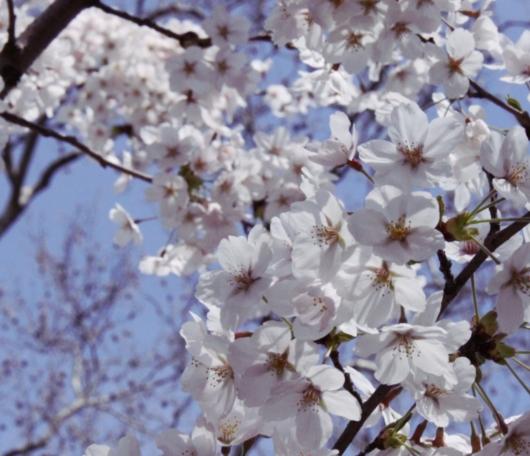 ニューヨークはすっかり春です_b0007805_2325443.jpg