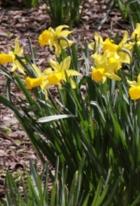 ニューヨークはすっかり春です_b0007805_232560.jpg