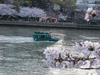 桜を少し。_d0051613_12533321.jpg