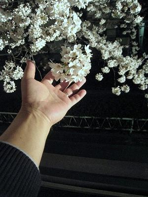 心に残る感動の花見会!_e0010418_18271153.jpg