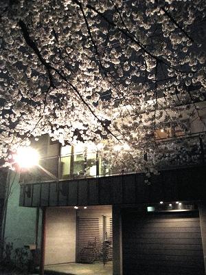 心に残る感動の花見会!_e0010418_1828468.jpg
